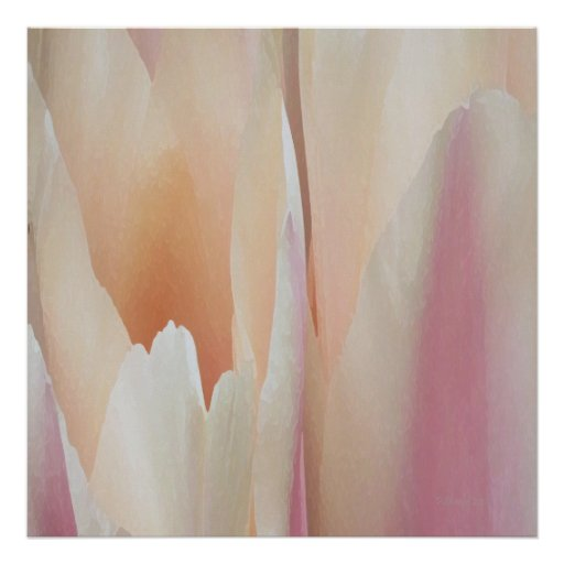 Tulips Posters