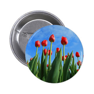 Tulips red flowers beautiful photo button, pin