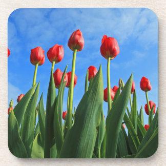 Tulips red flowers beautiful photo coaster