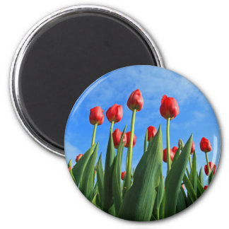 Tulips red flowers beautiful photo magnet