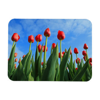 Tulips red flowers beautiful photo magnet, gift