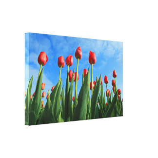 Tulips red flowers beautiful photo wrapped canvas