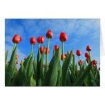 Tulips red flowers photo blank greetings card