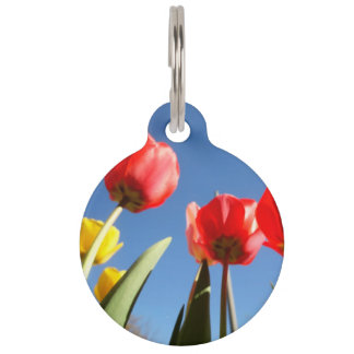Tulips Red Yellow Tulips Blue Sky Spring Seasons Pet ID Tag