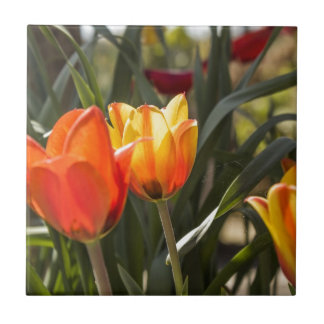 Tulips Small Square Tile