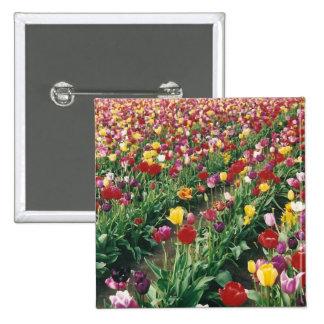 Tulips Square Button
