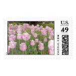 Tulips  stamps