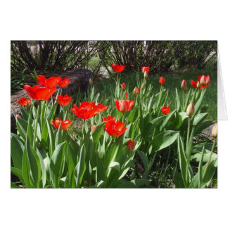 Tulips Stationery Note Card