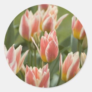 Tulips Round Stickers