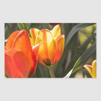 Tulips Rectangular Stickers