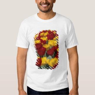 Tulips T Shirt