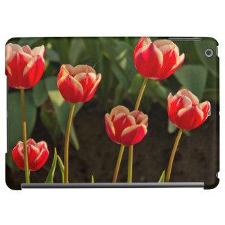 Tulips, Tulip Festival, Woodburn, Oregon, USA 1 iPad Air Cases