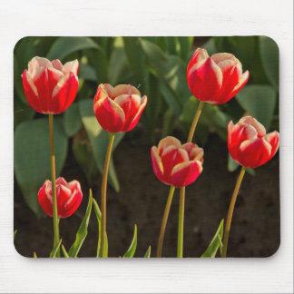 Tulips, Tulip Festival, Woodburn, Oregon, USA 1 Mouse Pad