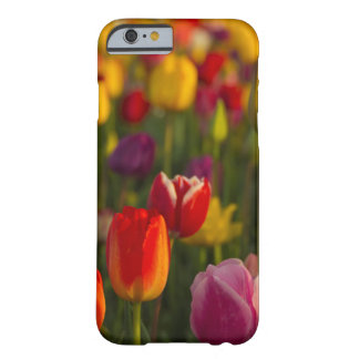 Tulips, Tulip Festival, Woodburn, Oregon, USA 2 Barely There iPhone 6 Case