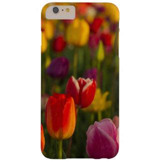Tulips, Tulip Festival, Woodburn, Oregon, USA 2 Barely There iPhone 6 Plus Case