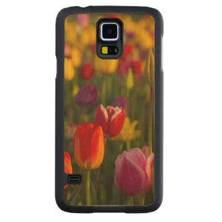 Tulips, Tulip Festival, Woodburn, Oregon, USA 2 Carved® Maple Galaxy S5 Slim Case