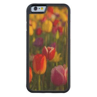 Tulips, Tulip Festival, Woodburn, Oregon, USA 2 Carved® Maple iPhone 6 Bumper Case