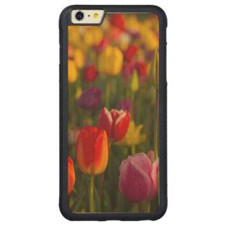 Tulips, Tulip Festival, Woodburn, Oregon, USA 2 Carved® Maple iPhone 6 Plus Bumper Case