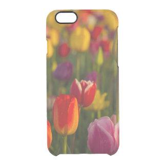 Tulips, Tulip Festival, Woodburn, Oregon, USA 2 Clear iPhone 6/6S Case