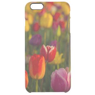 Tulips, Tulip Festival, Woodburn, Oregon, USA 2 Clear iPhone 6 Plus Case
