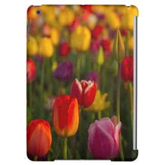 Tulips, Tulip Festival, Woodburn, Oregon, USA 2 iPad Air Cover