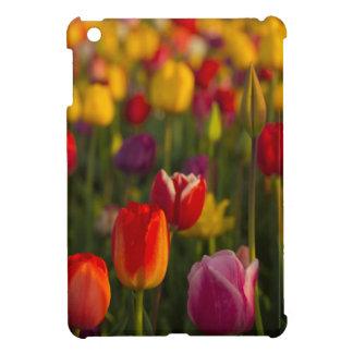 Tulips, Tulip Festival, Woodburn, Oregon, USA 2 iPad Mini Covers