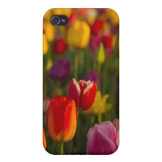 Tulips, Tulip Festival, Woodburn, Oregon, USA 2 iPhone 4/4S Cases