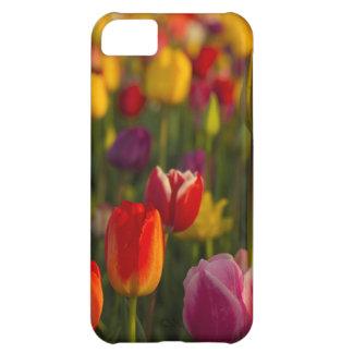 Tulips, Tulip Festival, Woodburn, Oregon, USA 2 iPhone 5C Case