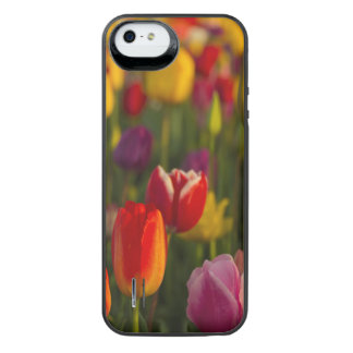 Tulips, Tulip Festival, Woodburn, Oregon, USA 2 iPhone SE/5/5s Battery Case