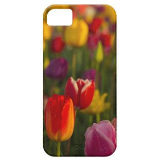 Tulips, Tulip Festival, Woodburn, Oregon, USA 2 iPhone SE/5/5s Case