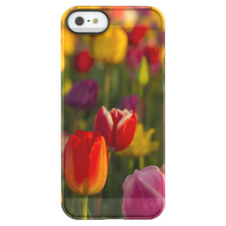Tulips, Tulip Festival, Woodburn, Oregon, USA 2 Permafrost® iPhone SE/5/5s Case