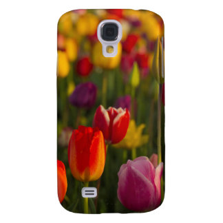 Tulips, Tulip Festival, Woodburn, Oregon, USA 2 Samsung Galaxy S4 Cover