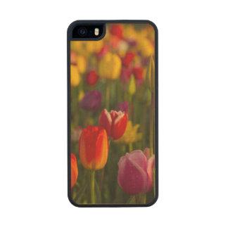 Tulips, Tulip Festival, Woodburn, Oregon, USA 2 Wood Phone Case For iPhone SE/5/5s