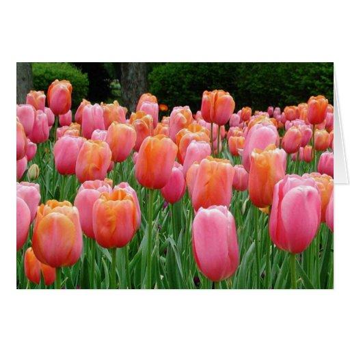 Tulips, tulips, tulips greeting card