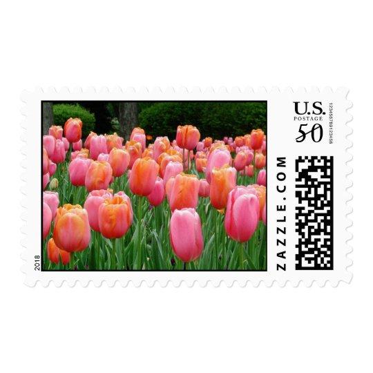 Tulips, tulips, tulips postage