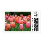 Tulips, tulips, tulips stamps