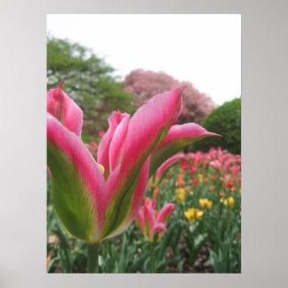 Tulips VI Poster