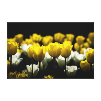 Tulips Yellow And White Canvas Print