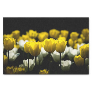 Tulips Yellow And White Tissue Paper