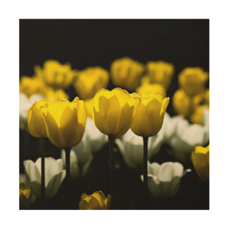 Tulips Yellow And White Wood Wall Art