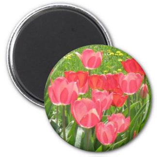 tulipsgarden magnet