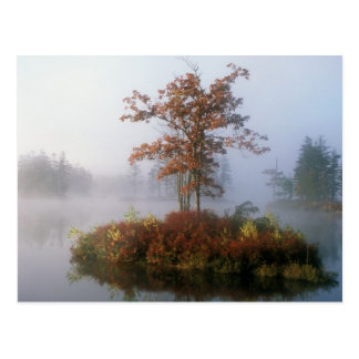 Tully Lake Island in the Fog Postcard