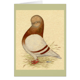 Tumbler Pigeon:  LFCL Mealy Card