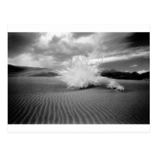 Tumbleweed en desierto postal