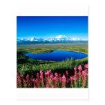 Tundra el monte McKinley Denali Alaska de la Postales