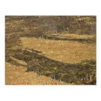 Tundra nacional de la reserva de Kanuti y quemado Tarjetas Postales