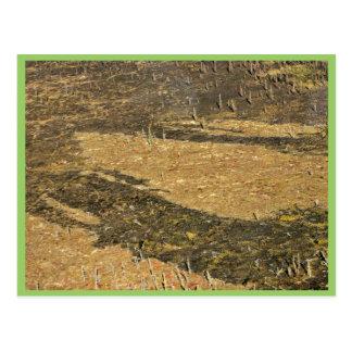 Tundra nacional de la reserva de Kanuti y quemado Postales