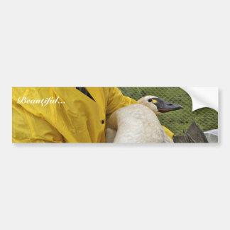 Tundra Swan - Banding Bumper Sticker