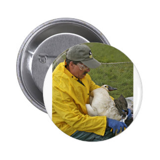 Tundra Swan - Banding Pinback Button