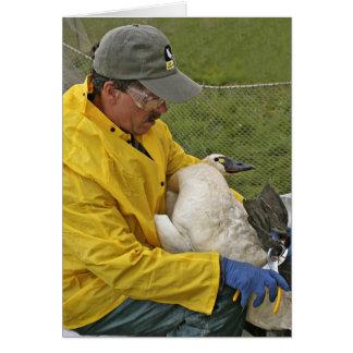 Tundra Swan - Banding Card